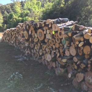 A stack of firewood to be used as mulch during the workshop.