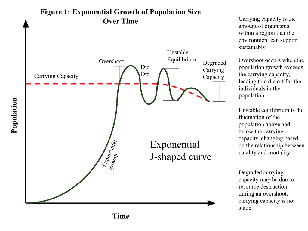 Exponential growth of population size over time.