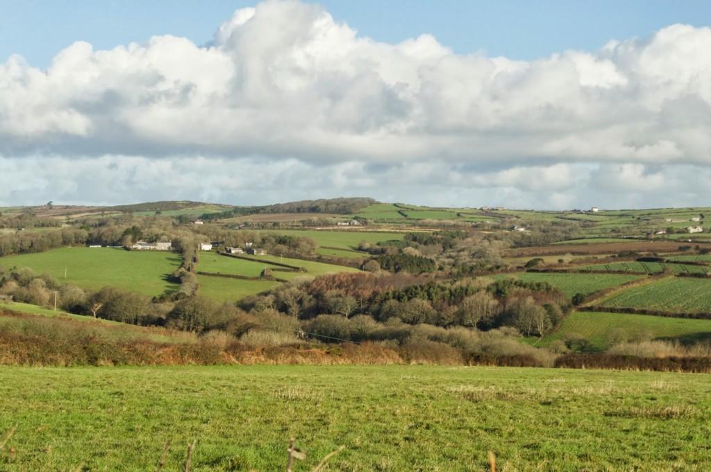 Fox Wood in west Cornwall